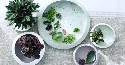 peperomia, woonplant, april, kamerplant, interieur