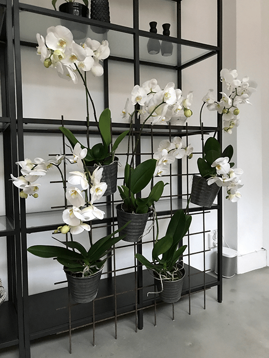 7-Wonenonline-blog-Style-jouw-interieur-met-een-orchidee-door-Styling-ID.png