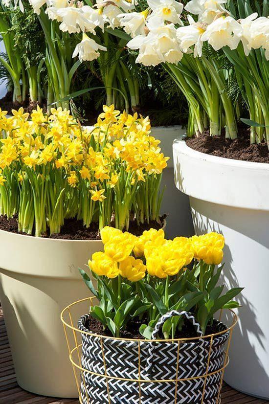 Energieboost Van Bloembollen Tuinplanten En Bloemen Tuin