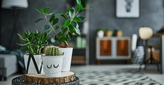 Stoer groen | Interieur
