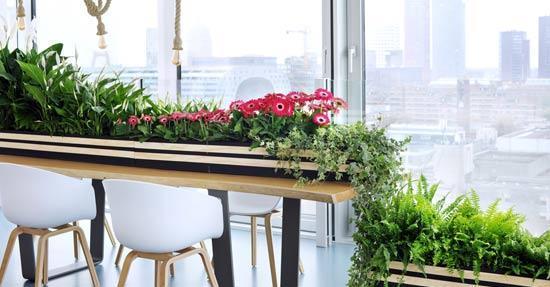 woonplant oktober zuiver groen planten en bloemen interieur. Black Bedroom Furniture Sets. Home Design Ideas