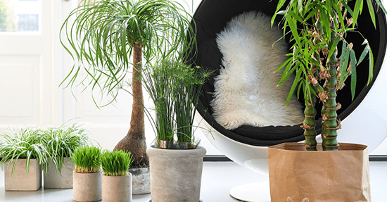 Planten en bloemen interieur