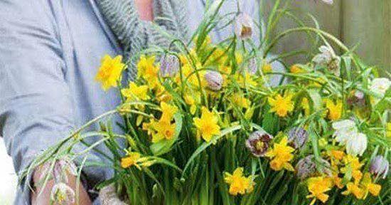 Bollen Bloeiend Voorjaar : Voorjaar in een handomdraai planten en bloemen interieur