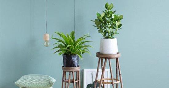 top 8 hippe kamerplanten planten en bloemen interieur