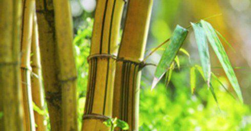 Bamboe de vloer van de toekomst? vloeren
