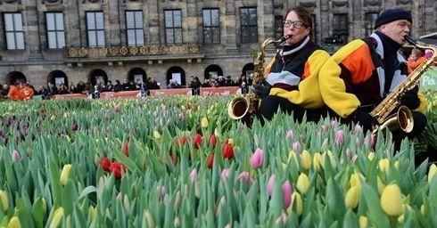 Interieur Hollandse Tulpen : Tijd voor tulpen planten en bloemen interieur