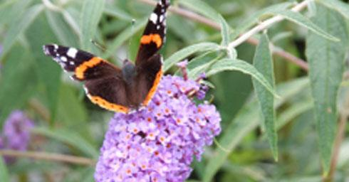 Vlinderfeestje tuintips tuin for Vliegen in de tuin