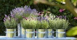 Buitenleven Relaxen Lavendel : Lavendel in winter buitenlevengevoel